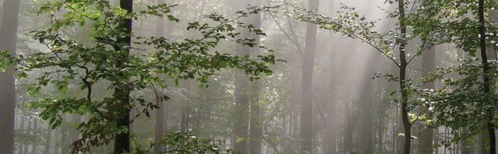 Blog-image-trees